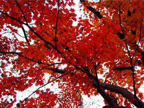 ■ロビーより【秋】■