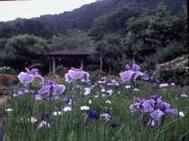 菖蒲園 六百坪に五百種が咲き競う