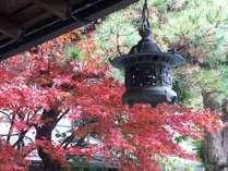 玄関の紅葉