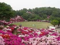 日本海側最大規模のつつじの名所、西山公園。道の駅も併設、当館より車で30分