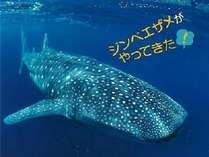 【サンクスキャンペーン】☆シーパラダイスプラン☆(ワンデーパス付き)
