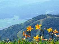 雄大な北アルプスと可憐な高山植物の競演…白馬五竜高山植物園へご優待!