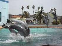 南知多ビーチランドで人気のイルカのショー