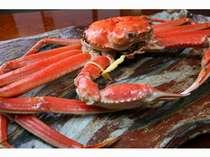 正真正銘の越前蟹の証明である黄色いタグ付き!1.4キロ以上のズワイ蟹を使用いたします。
