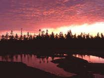 【朝焼けに染まる八幡沼付近の湿原】