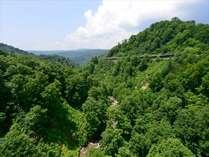 ブナの森に囲まれた大自然の中で湯治をお楽しみいただけます。