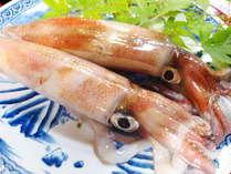 日本海で獲れた新鮮なイカ♪