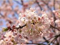 【じゃらん限定】♪さくら~さくら~♪のお花見プラン