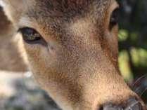 【ホテル前に住む野生の鹿】野生動物とのふれあいがこんなに間近で♪♪1200*