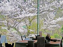 春のレストランは桜が一面に広がります★