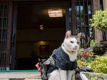 *リュウ/ようこそいらっしゃいませ!湯畑まで徒歩30秒の草津温泉 中村屋旅館です