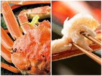 【タグ付越前かに】お二人で一杯!茹で越前蟹を丸ごと♪最高級ブランドを食す!7つの特典付☆
