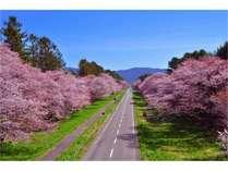 【GWは桜と春ウニで有名な日高へ行こう♪】GW満喫プラン♪