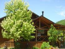 シンボルツリーメープルの樹