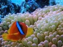 かわいい熱帯魚に会いに来て!