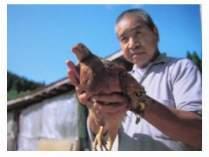 こだわりの奥美濃古地鶏。 撮影:塩崎 聰氏