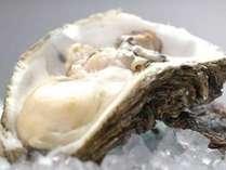 濃厚で芳醇な味のキラッキラ輝く岩牡蠣