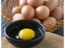"""「大地の卵」昔なつかしい""""山吹色の卵""""。卵かけ御飯で大変美味しく召し上がれます。"""