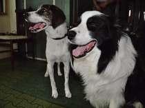 ユートピアの看板犬テン&友達のミックス犬のマルです。