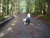 木漏れ日の散歩道(2013年マッシー君は天国に召されました。)
