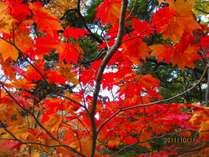 竜頭の滝紅葉
