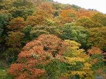 当館、特別室から眺める紅葉