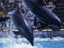 【水族館チケット付きプラン】 ★水族館『マリンピア日本海』のチケット付き!★