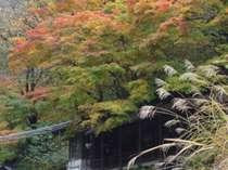 紅葉の季節の巌風呂へは錦に飾られたもみじやススキの中を歩いてどうぞ
