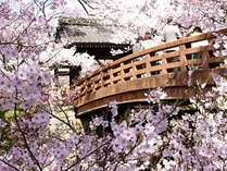 *天下一とうたわれる「高遠城址公園」の桜(当館より車で約15分)