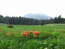 【最大30%OFF】尾瀬国立公園10周年・村政独立100周年記念プラン