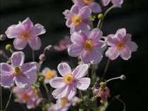お庭には秋の花がたくさん咲いています
