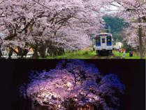 【桜チェリーブロッサムフォレストフェア☆2018】桜御膳コース(和食) ~12:00レイトアウトOK~