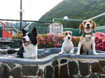 【ペット専用露天風呂】自然を眺めながらの入浴でペットも大満足♪シャワー完備です。