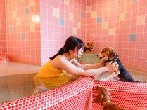【家族風呂】ペットと一緒に入浴できる貸切風呂もございます。