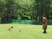 緑豊かなドッグランで愛犬も大喜び・ペットリゾートカレッジは車で約30分