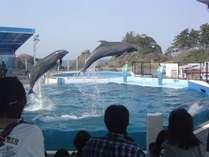 越前松島水族館(イルカショーイメージ)