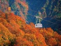 紅葉の八海山ロープウェー(新潟県南魚沼市)