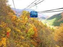 紅葉ドラゴンドラ!秋色第空中散歩!片道30分。乗車しながら渓谷の紅葉が楽しめます。