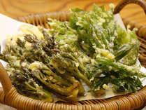 【春の味覚】遠山郷でとれた《山菜料理&ジビエの山国料理》地元の食材を使って女将が心を込めてつくります