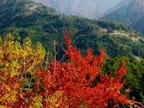【秋の味覚】キノコ料理&山国料理♪遠山郷の旬の料理を堪能!期間限定の味。特典付♪1泊2食付 プラン