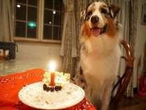【館内すべてペットと一緒】大切なご家族とワンちゃんの記念日お祝いプラン