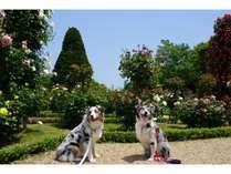 河津バガテル公園の愛犬ユリ