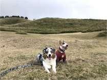 稲取細野高原でワンコと遊ぶ