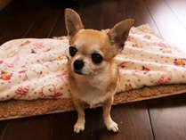 ペット専用客室は数に限りがあるため、お早めにご予約下さい。