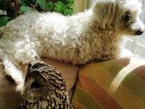 当館のマスコット、ふくろうのふーちゃんと看板犬チェリーはとっても仲良し♪
