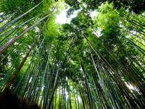 【二食付プラン】嵯峨嵐山駅目の前!観光の拠点にして京都、嵯峨・嵐山を満喫♪