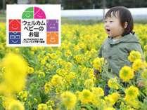 千葉県といえば「菜の花」房総エリアは、さまざま場所で開花しています。
