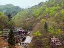 新緑と山桜に囲まれる