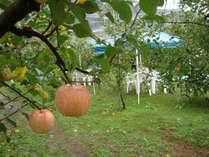 【10/20~12/3限定】豊穣の秋を感じるりんご狩りとグルメ会席プラン(2食付)