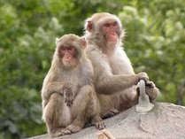 【~8/17宿泊分】 釧路市動物園入園券付き♪夏の思い出づくりプラン☆彡(夕朝食付)